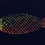 Fish 016